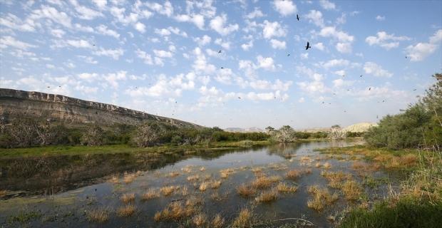 Son 250 senede 571 bitki türü yok oldu