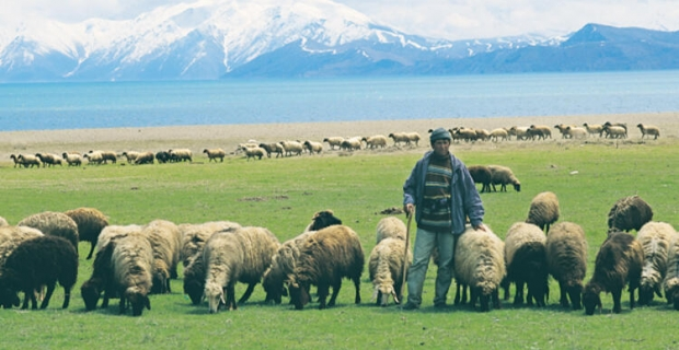 Hayvan yetiştiricilerinden, atıl hazine arazilere yönelim çağrı
