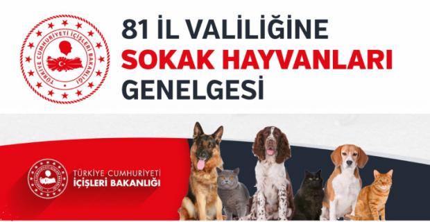 İçişleri Bakanlığı'ndan sokak hayvanları için genelge