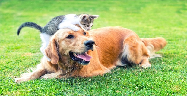 Kediler corona virüsten enfekte olabiliyor