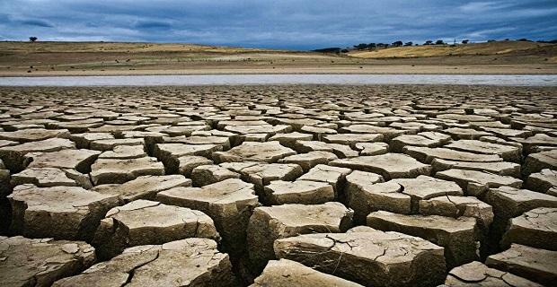 Kanada'da kuraklık tarımsal afete neden oldu: Tarlaları çekirgeler istila etti