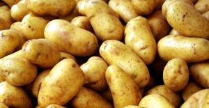 TZOB Başkanı Bayraktar: Patates tüketelim