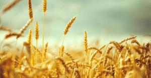 Küresel gıda fiyatlarında yüzde 3'lük artış
