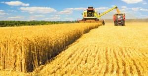 Buğdayda kriz alarmı!