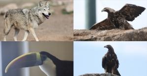 Yaban hayatının 'can kurtaran' hayvanat bahçesi