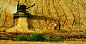 Buğdayda rekolte beklentisi en az 20 milyon ton