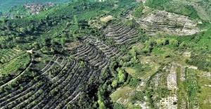 Ormanlaştırma iklim değişikliğine çare olabilir