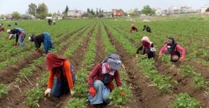 Çukurova'da tarımsal üretim hız kesmiyor