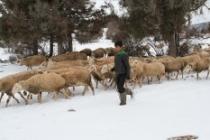 Kış şartlarında besicilerin zorlu yaşamı