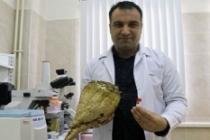 'Bakteriler çalışacak Türk tarımı kazanacak'