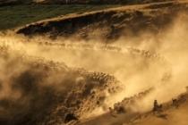 Sürülerin, Nemrut Dağı'na tozlu yolculuğu