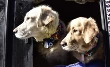 Veterinerlerden 'evcil hayvan besleyenler kayıt altına alınsın' talebi