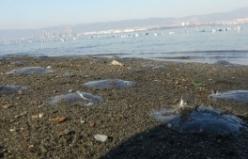 Marmara Denizi çevresinde denizanası ölümleri