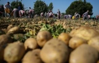 Tarım ve Orman Bakanı Pakdemirli: Türkiye patates...