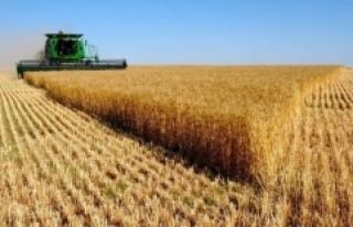 Tarım ÜFE yıllık bazda yüzde 20,2 arttı