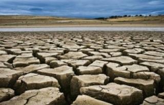 Kanada'da kuraklık tarımsal afete neden oldu:...