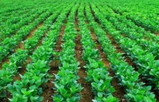 Soya fasulyesi fiyatları 10 ayın dip seviyesine...