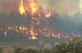 Üniversite analizi: Manavgat yangını Türkiye'deki en büyük yangın felaketi oldu